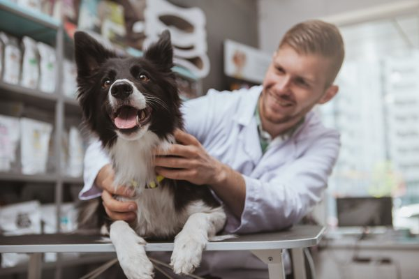 Effective July I, 2015, Florida veterinarians can dispense compounded medications to their patients' owners and caretakers.