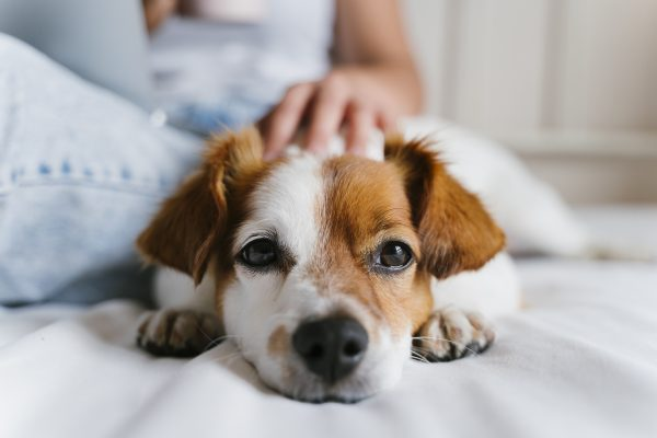 INFLUENZA and Your Pet